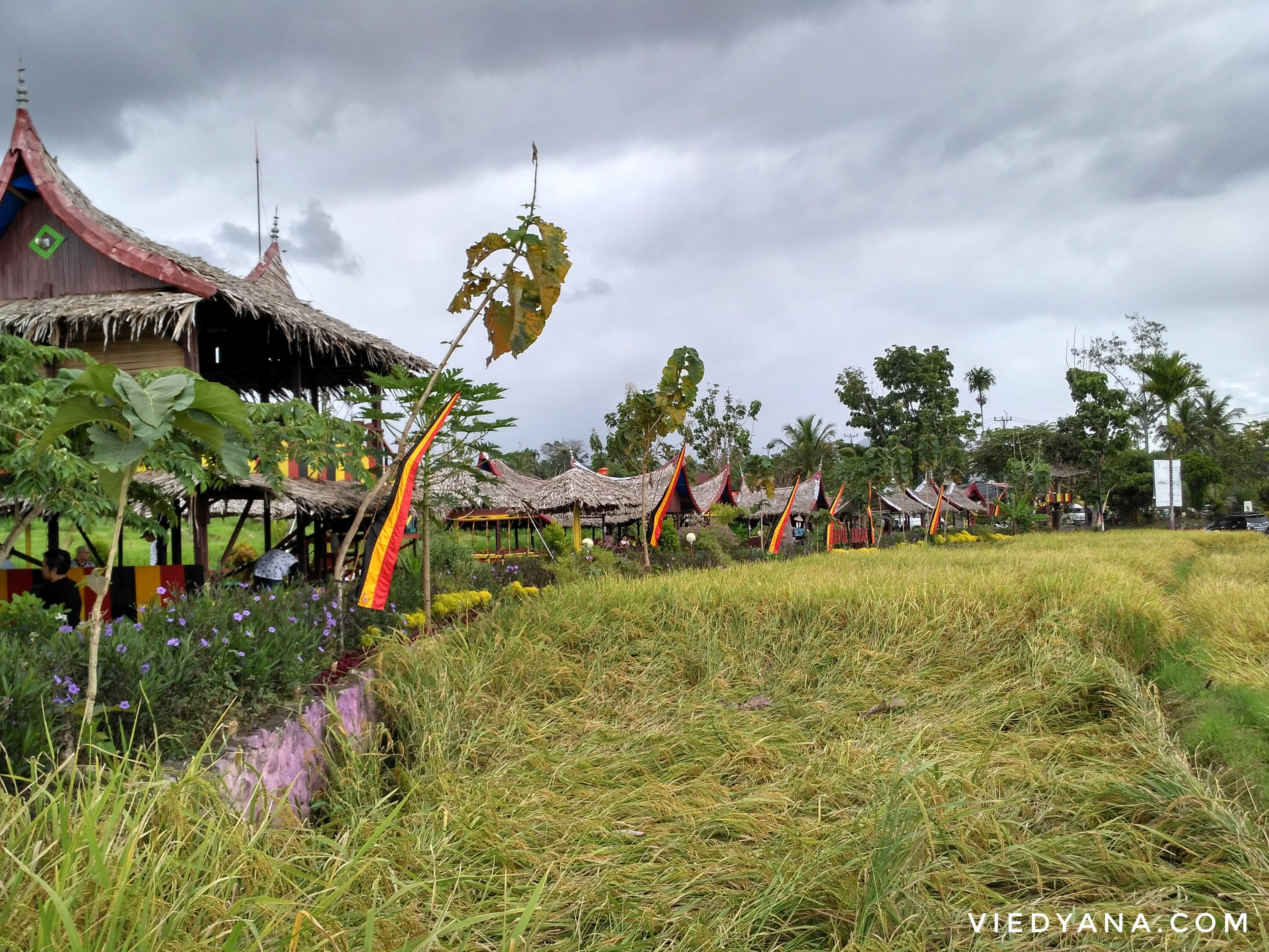 RoadTripMbokJastra#10: Makan Tangah Sawah di Dapua Amaak