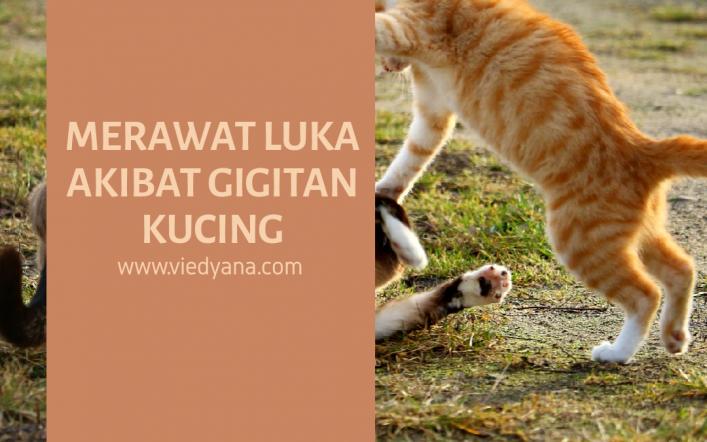 Merawat Luka Akibat Gigitan Kucing
